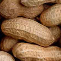 Why Are We Nuts About Sanctions?